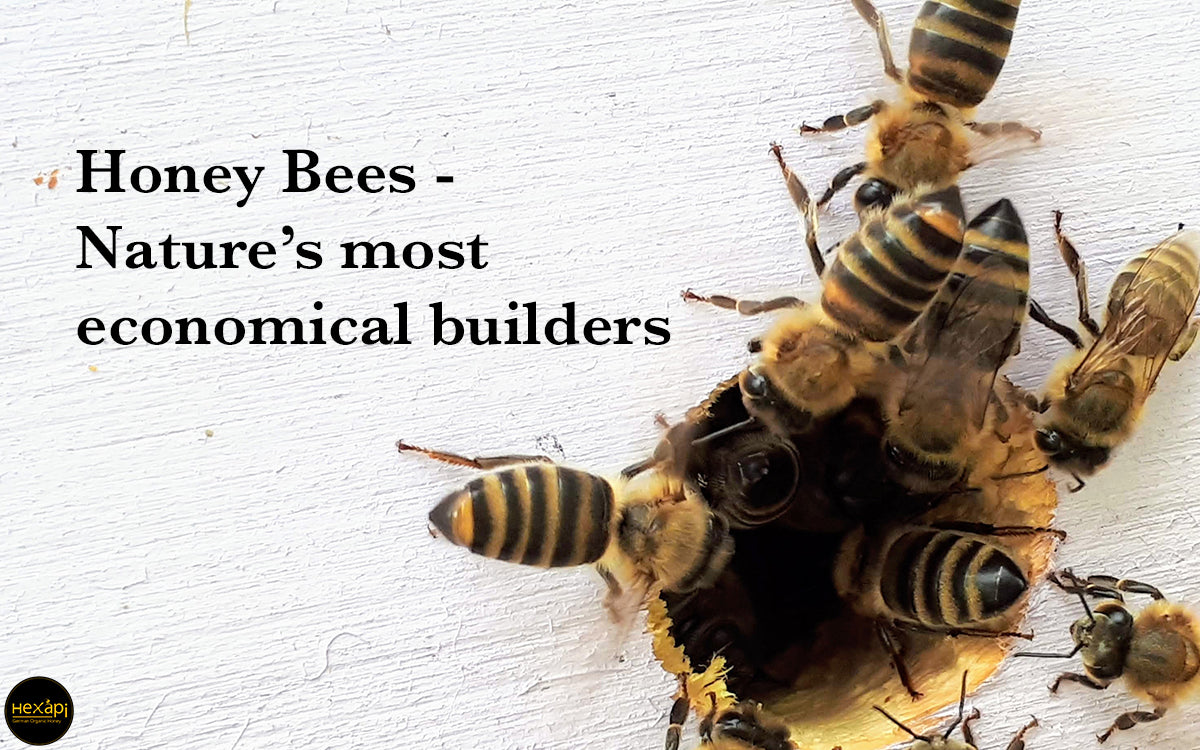 Hexapi Honey Bees - Nature's economical builders