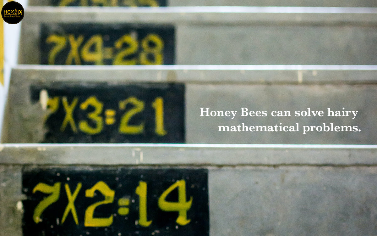 Honey Bees can solve hairy mathematical problems