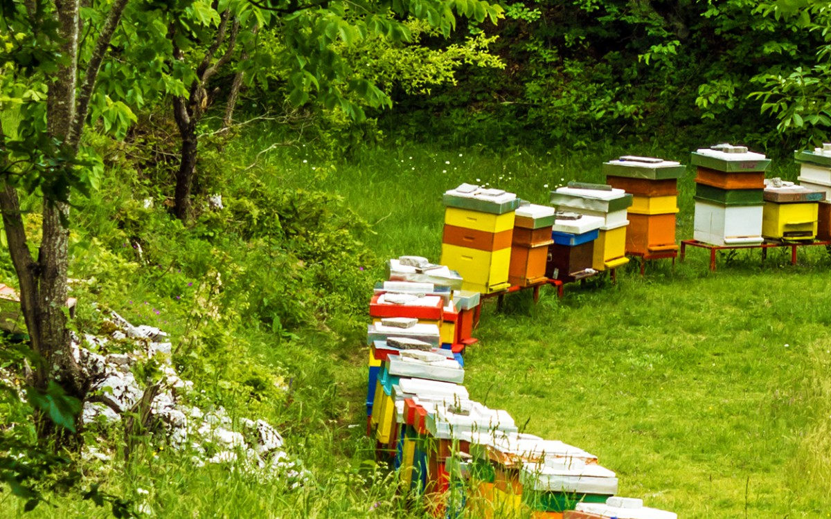 Make sure your honey is made by bees from organic plant nectar ...