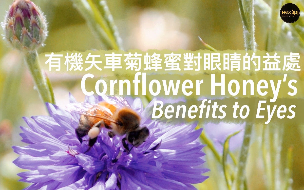 Eye Protector | Cornflower Honey| Hexapi Honey Hong Kong