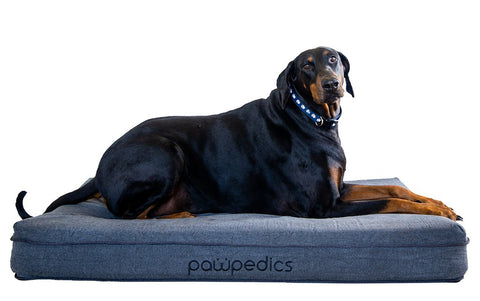 Large dog sitting on a charcoal coloured dog bed