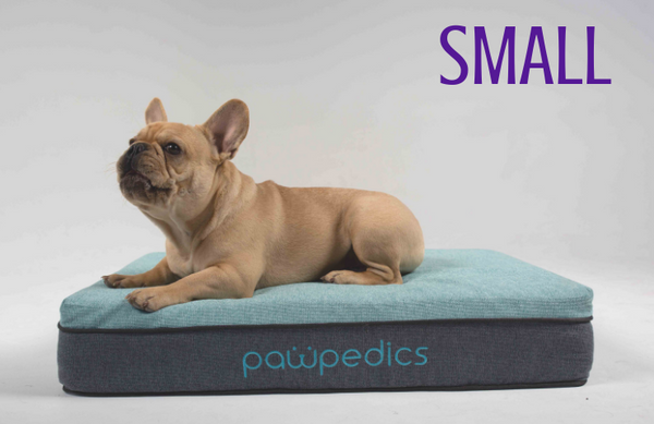 French bulldog sitting on small dog bed