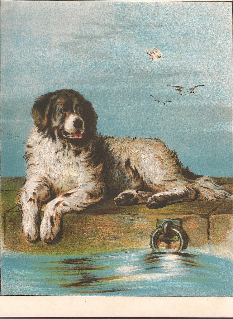 Newfoundland Terrier, Antique Print of the Sir Edwin Landseer Painting