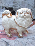 Pekingese Lion Dog front view.
