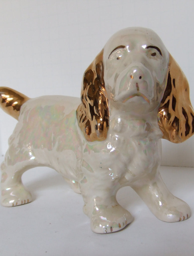 Cocker Spaniel in Pearlescent White and Gold