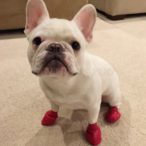 Waterproof Rubber Rain Shoes for the Pupper - Wrinkles & Cupcakes