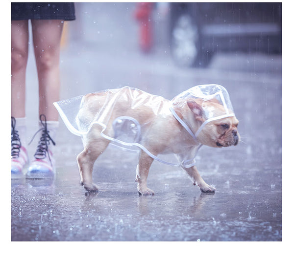 Transparent Raincoat with Hood