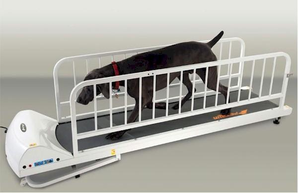 PetRun PR725 Dog Treadmill - Gentle Giant Pet Supply