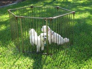 Crown Convertible Pet Yard & Gate - Gentle Giant Pet Supply