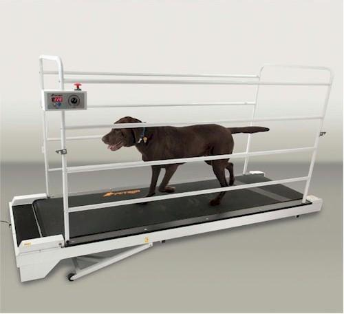 PetRun PR730 Dog Treadmill - Gentle Giant Pet Supply