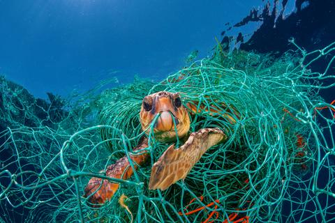 sea turtle trapped in net
