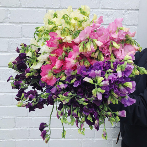 order bunch of Sweet Pea