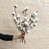 Dried Cotton Order Online Melbourne