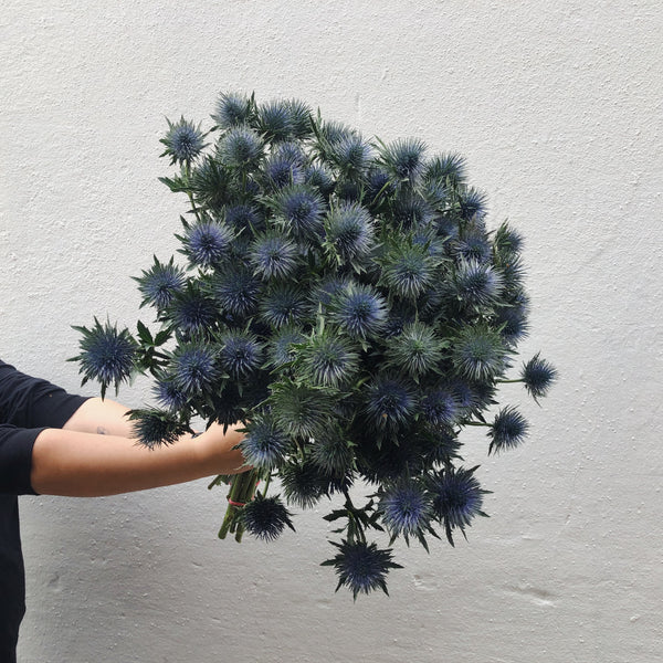 order sea holly online