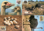 South West Africa 1985 Ostrich Birds Eggs Wildlife Sc 536-39 Max Cards # 16546