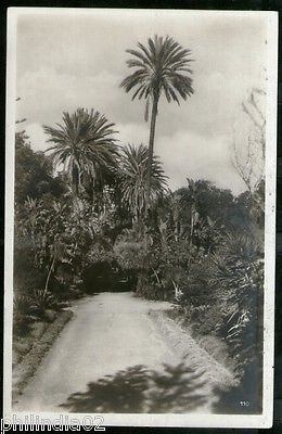 Algeria 1928 Algiers Palm Tree & Road View / Picture Post Card to Germany # 128