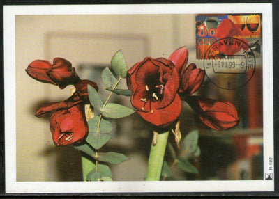 Netherlands 1999 Greetings Flowers Sc 1035 Max Card # 6023