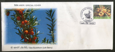 India 2018 Sea Buckhorn Leh Berry Fruits Plant Tree Special Cover # 6842