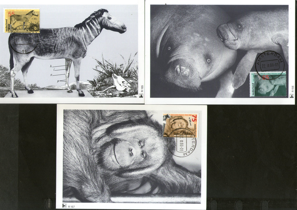 Netherlands 1988 Zoological Society Chimpanzee Horse Marine Life Wildlife Animals Set of 3 Max Cards # 18 - Phil India Stamps