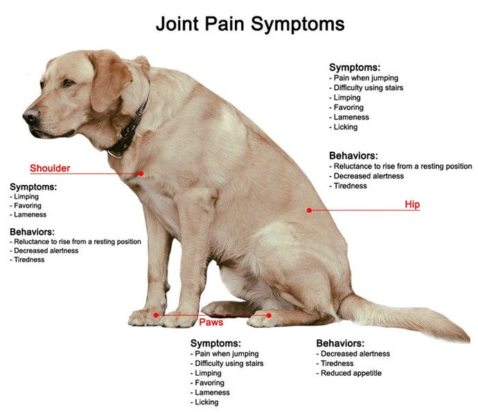 Arthritis in Dogs: What is it, and how to Help Your Canine?