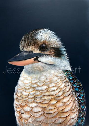 Ollie the Kookaburra