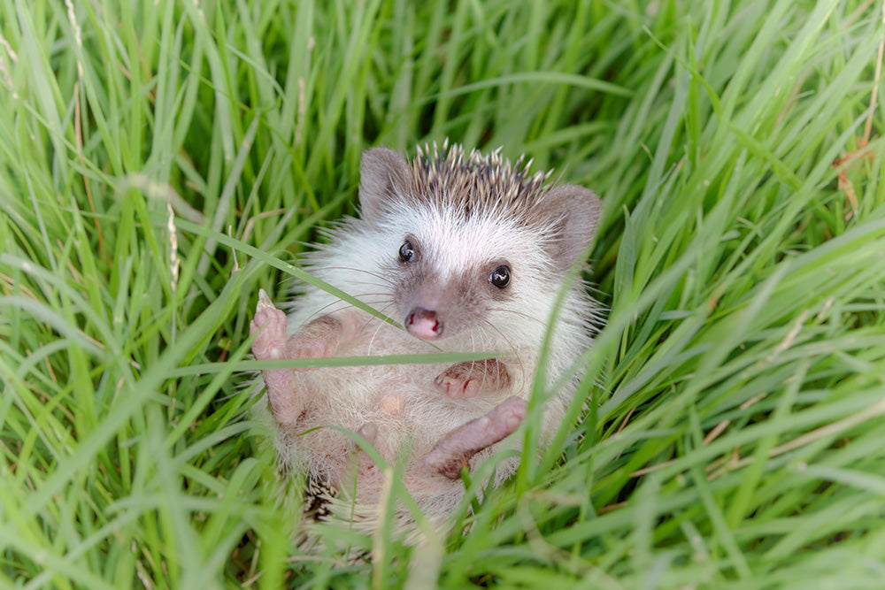 Remembering Hedgehog Day