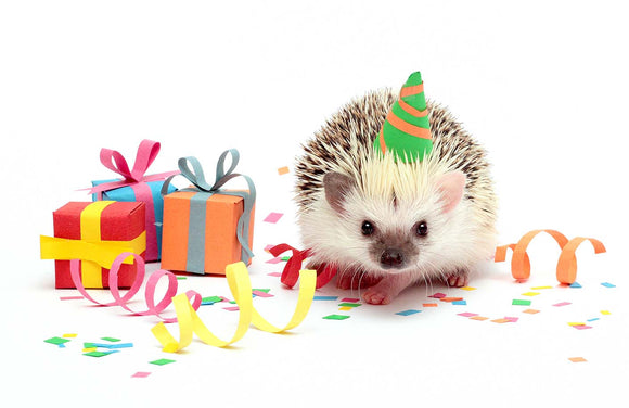 hedgehog-with-gifts