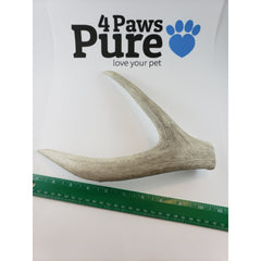 Naturally Shed Deer Antler