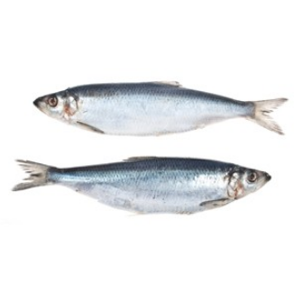 Herring - Frozen whole (5 whole herring per package)