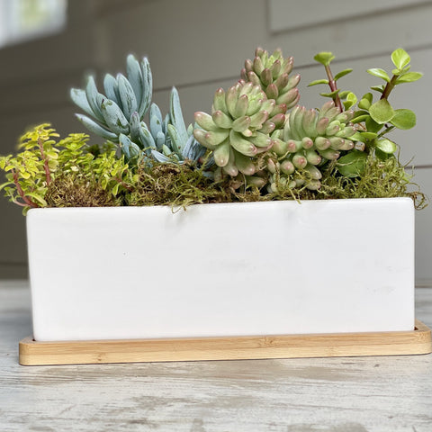 succulents in rectangular ceramic vase, wood base