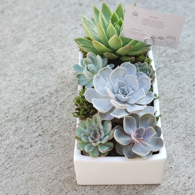 retangular white ceramic vase filled with succulents