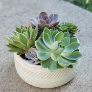 Large ceramic pot filled with living succulents