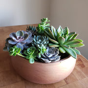 Copper cement pot filled with living succulents