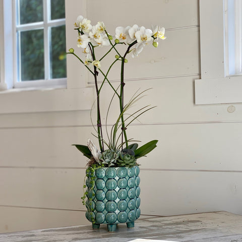 Double Phalaenopsis orchid with air plant, three succulents, driftwood, beach stone and moss in blue ceramic planter