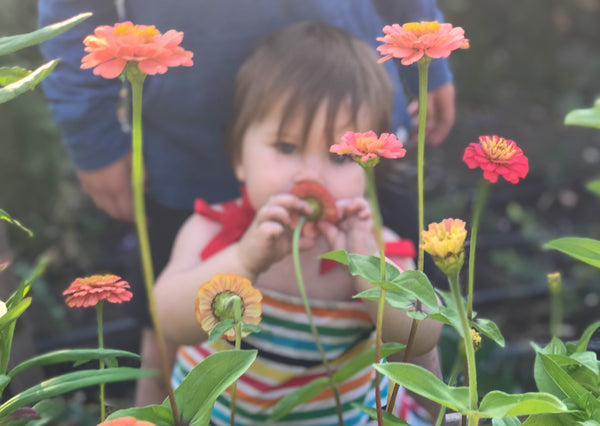 Baby girl smelling the zinnias in our garden