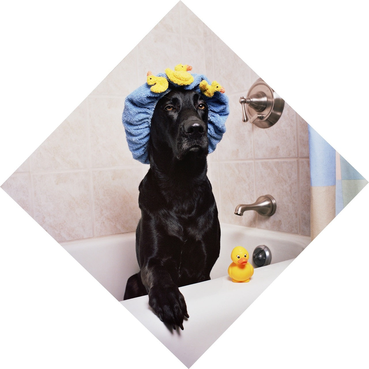 How to bath a dog to get rid of fleas