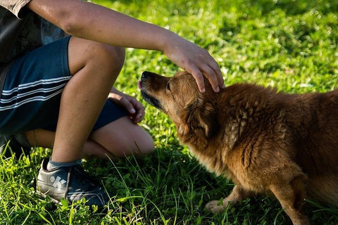 The Most Common Dog Aggression Types and How to Deal with Them |