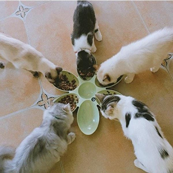 6 Connected Bowls for Pet