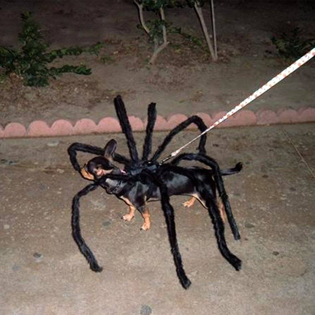 Dog With Spider Costume Scary Black Spider Halloween
