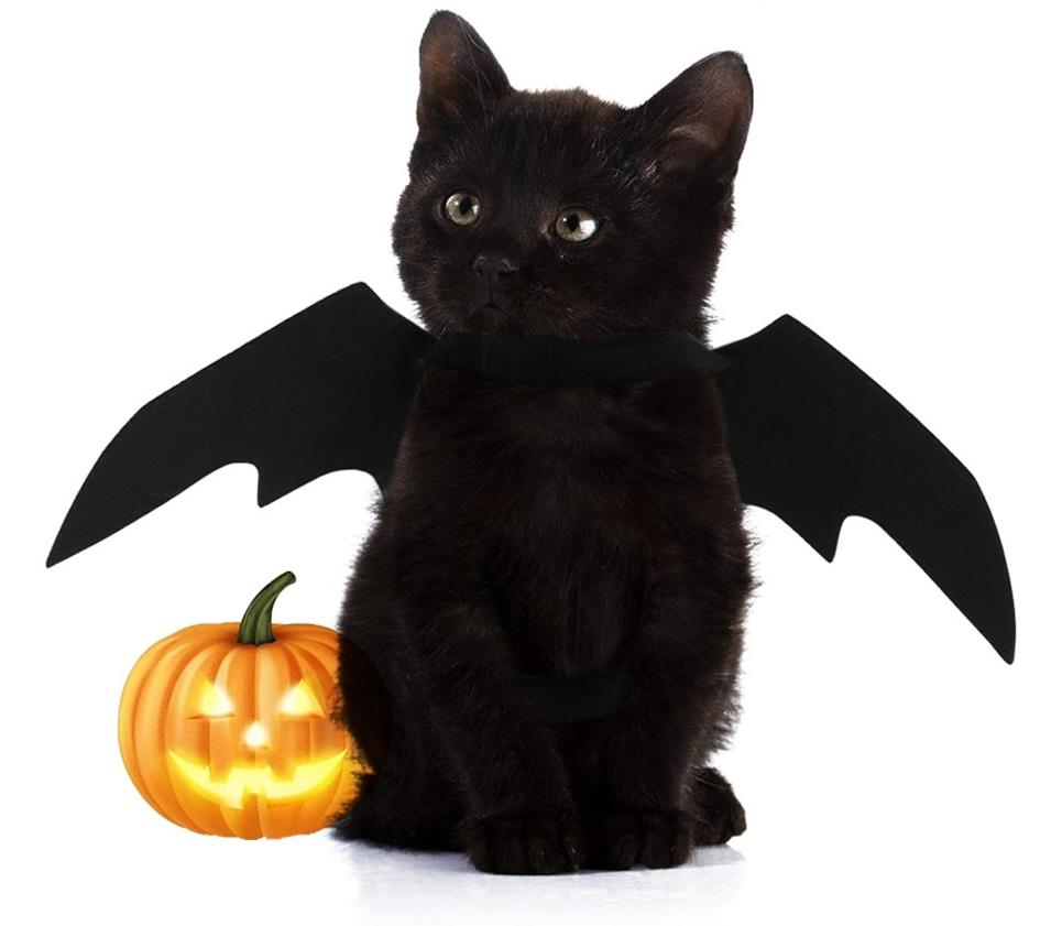 Halloween Bat Wings