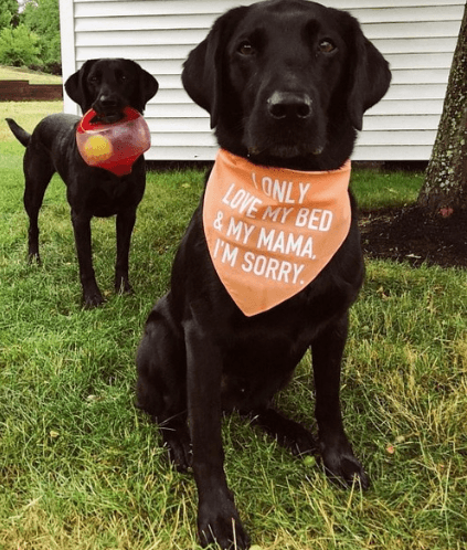 I ONLY LOVE MY BED & MY MAMA SCARF GlamorousDogs Orange