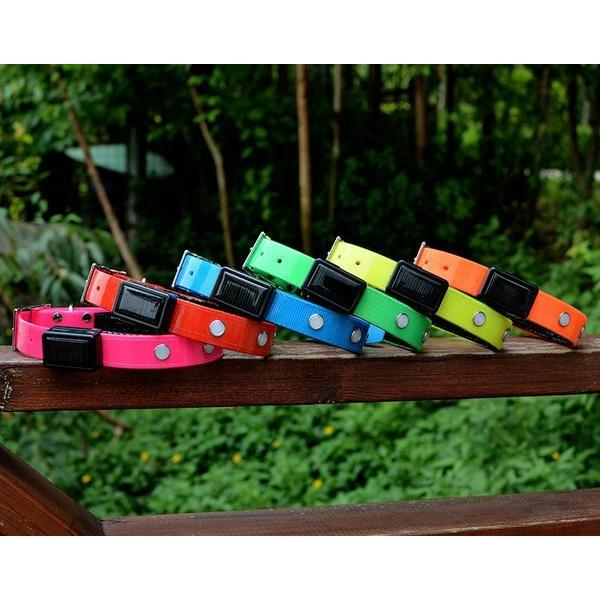 Keep them Visible with the Solar Chargeable LED Collar Stunning Pets
