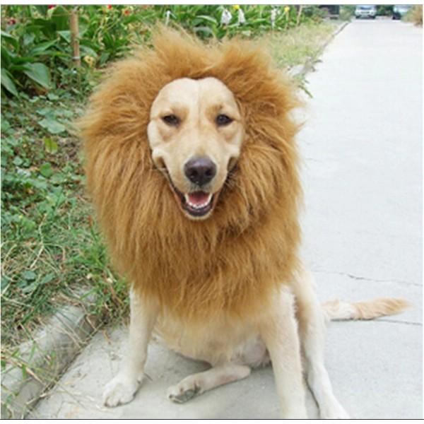 098f3c1be Lion Mane For Dogs, Turn Your Dog Into A Strong Lion Dog Wig GlamorousDogs