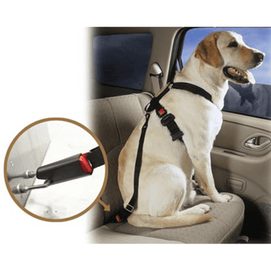 Pet Car Seat Belt Stunning Pets
