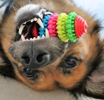 Premium Dog Teeth Cleaning Toy Stunning Pets Multicolor 3 Gears Chew toy