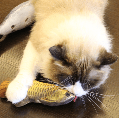 Stimulating Fish Toy For Cats and Dogs Stunning Pets