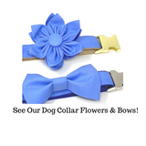 Blue, Dog Collar, Gold, Silver, For Boys, Personalized, Engraved, Custom, Puppy Collar, Cat Collar