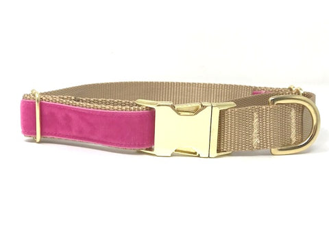 pink and gold velvet martingale dog collar with buckle for girls, female, personalized, engraved, upscale, fashion, designer, pretty, cute, unique, small, medium, large, xl