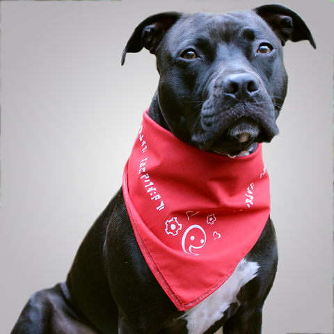 Bastion Bandanna - Benefiting Family Dog Rescue
