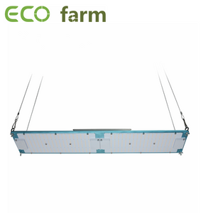 ECO Farm  Carte Quantum 120W / 240W avec Samsung LM301H + Puces Epistar + Driver MeanWell Blue Type Dimmable LED Grow Light vente rapide